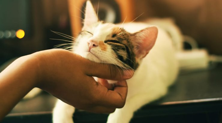A Pet-Owner's Guide to CBD